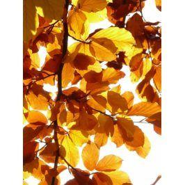 Tištěný obraz - Listy stromu